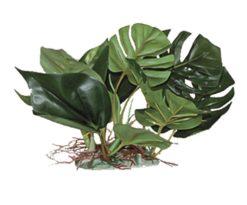 Mantovani pianta dekor anubias l cm 20.