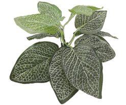 Mantovani pianta dekor fittonia s.