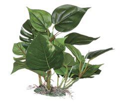 Mantovani pianta dekor anubias xl cm 25.
