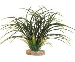 Mantovani pianta sydeco fan grass cm 30.