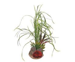 Mantovani pianta sydeco grass maxi cm 43.