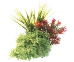 Mantovani pianta sydeco tropica bouquet cm 20.