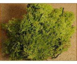 Busta lichene verde 30 g.