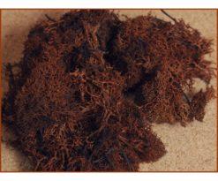 Busta lichene marrone 30 g .