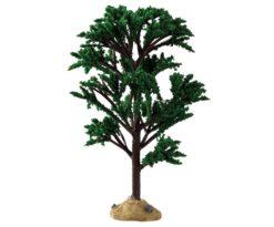 Green elm tree.