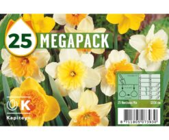 Mega pack narcissus mixed colours 25.