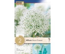 Allium Mount Everest Allium stipitatum 'Mount Everest'.