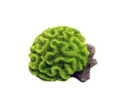 Corallo Verde Su Roccia Cm 17